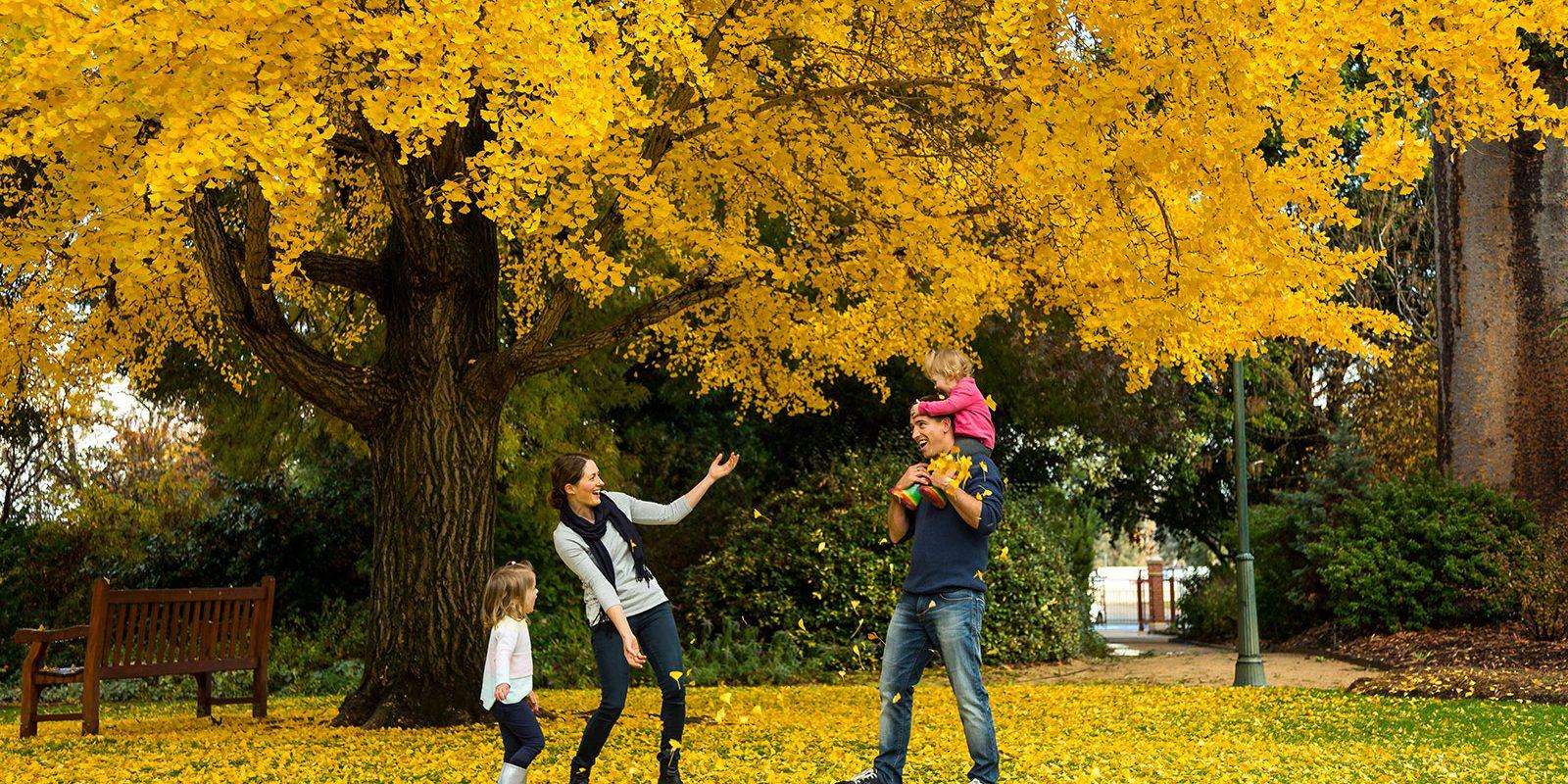 Autumn in the Albury Botanical Gardens