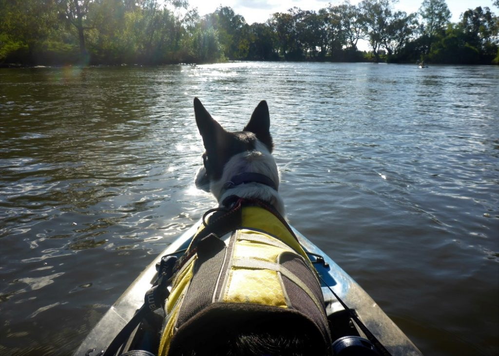 Murray River Canoe Hire